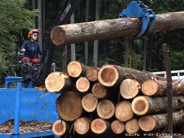セブンルール/#125 ダンサーから危険で過酷な林業へ転身