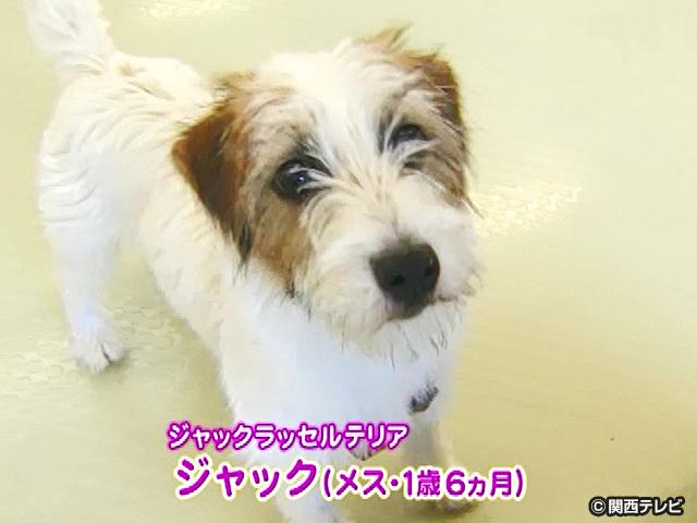 【会員無料】きょうのおともだちは?/技の練習にはげむ犬3匹