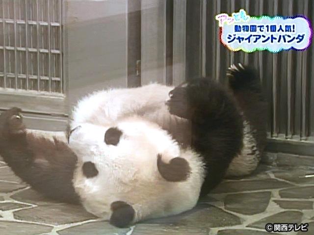 【会員無料】きょうのおともだちは?/ジャイアントパンダ