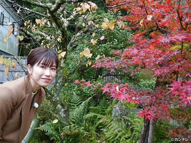 横山由依(AKB48)がはんなり巡る 京都 いろどり日記/第98回 心惹かれるままに紅葉の京都を散策