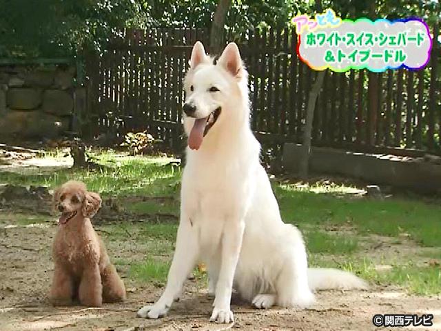 【会員無料】きょうのおともだちは?/仲良しコンビの犬