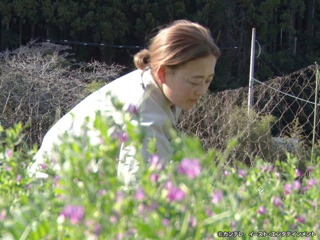 セブンルール/#202 野山に咲く花の専門店!人気の秘密