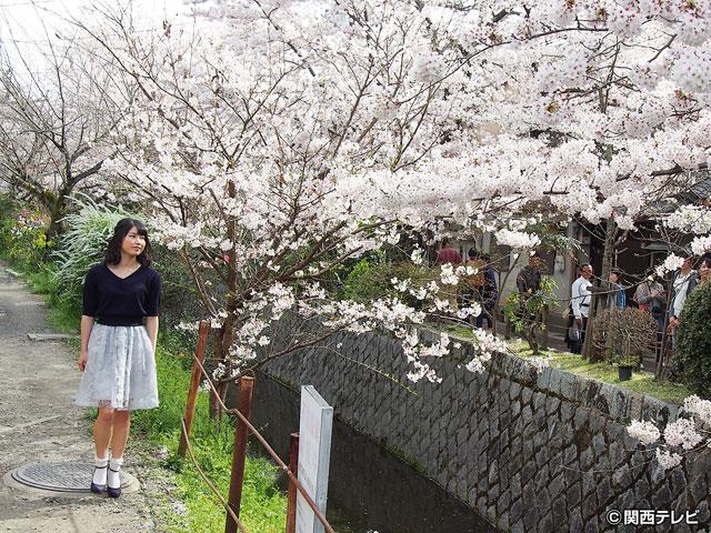 横山由依(AKB48)がはんなり巡る 京都 いろどり日記/第34回 桜満開の京都 哲学の道を歩きながら思うこと