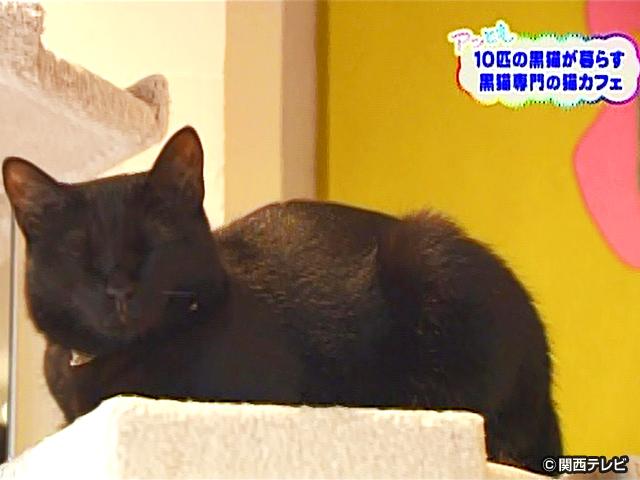 【会員無料】きょうのおともだちは?/黒ネコ