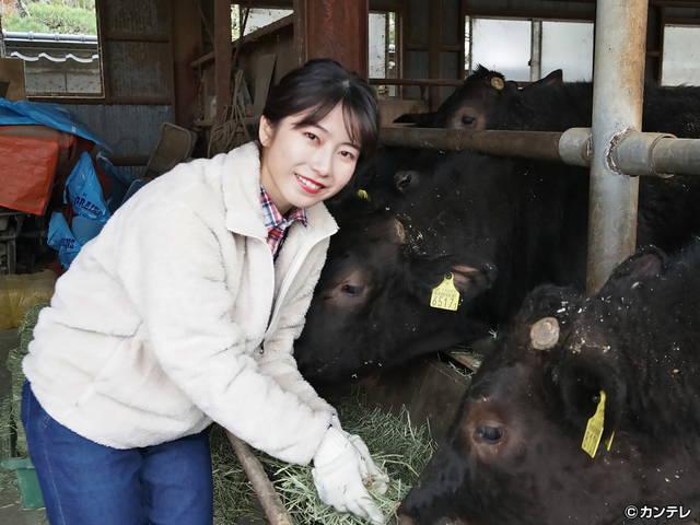 横山由依(AKB48)がはんなり巡る 京都 いろどり日記/【番外編】第80回 幻の京の食材で究極のすき焼き