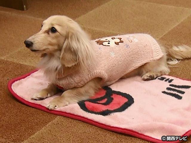 【会員無料】きょうのおともだちは?/おはよう、おやすみが上手な犬