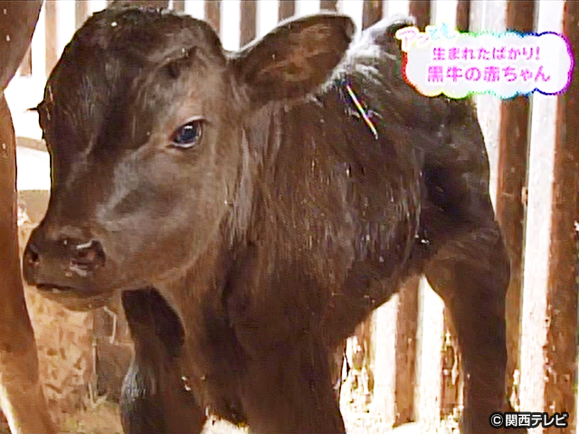【会員無料】きょうのおともだちは?/黒牛