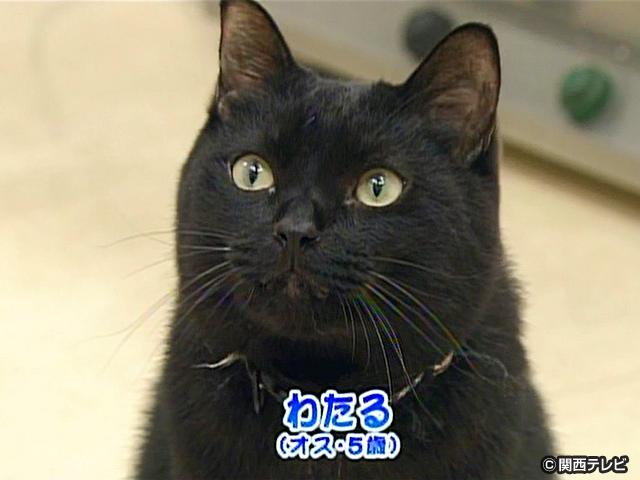 【会員無料】きょうのおともだちは?/ネコ